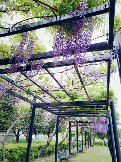 What Is the Significance of a Pergola?