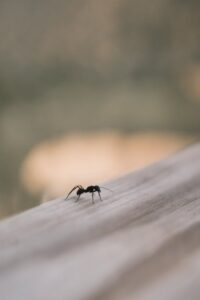 The amazing advantages of working with professionals for pest control
